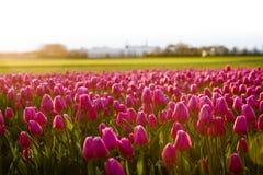 Flores por la tarde Foto de archivo libre de regalías