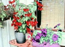 Flores por la ventana Fotos de archivo libres de regalías