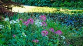 Flores por los jardines de Vandusen de la charca imágenes de archivo libres de regalías