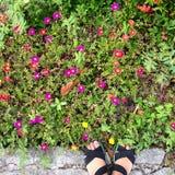 flores por todas partes Imagen de archivo libre de regalías