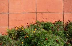 Flores por uma parede de pedra Fotos de Stock Royalty Free