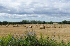 Flores por un campo de los granjeros Imagen de archivo libre de regalías