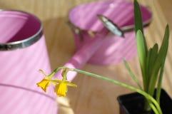 Flores, potenciômetro e molhar Fotografia de Stock