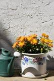 Flores Potted com lata da água fotografia de stock royalty free
