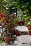 Flores Potted en balcón Imagen de archivo libre de regalías