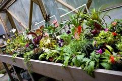 Flores Potted en invernadero Imágenes de archivo libres de regalías