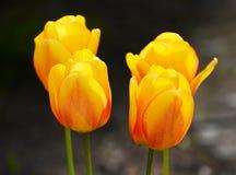 Flores preciosas Fotografía de archivo