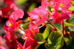 Flores preciosas Imagenes de archivo