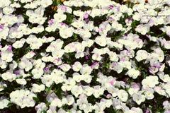 Flores preciosas Fotos de archivo