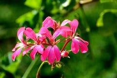 Flores preciosas Foto de archivo libre de regalías