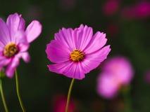 Flores preferidas Fotografía de archivo
