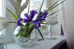 Flores preferidas de la primavera del ` s de las mujeres imagen de archivo