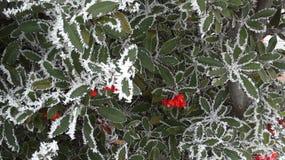 Flores presas entre hielos de la Navidad Foto de archivo