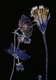Flores presionadas neón en negro Imágenes de archivo libres de regalías