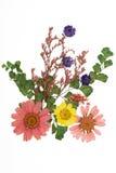 Flores pressionadas Foto de Stock Royalty Free