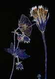 Flores pressionadas néon no preto Imagens de Stock Royalty Free