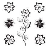 Flores preto e branco Imagem de Stock