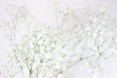 Flores primer, fondo del gypsophila de la respiración del bebé Alta fotograf?a dominante foto de archivo
