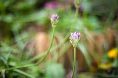 Flores púrpuras agradables Foto de archivo libre de regalías