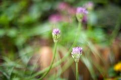 Flores púrpuras agradables Imágenes de archivo libres de regalías