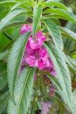 Flores purpúreas claras Foto de archivo