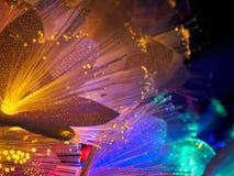 Flores que brillan intensamente de hadas hermosas Fotografía de archivo libre de regalías