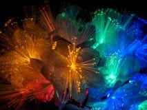 Flores que brillan intensamente de hadas hermosas Imágenes de archivo libres de regalías