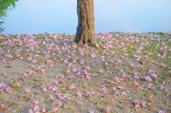 Flores que caen Fotos de archivo libres de regalías