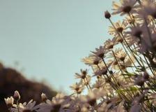Flores que crescem naturalmente avante agradavelmente fotos de stock