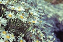 Flores que crescem naturalmente avante agradavelmente fotos de stock royalty free