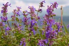 Flores que dançam com o vento imagens de stock