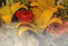 Flores que derivam na névoa Fotografia de Stock Royalty Free