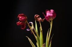 Flores que desmenuzan secadas en un fondo negro Imagen de archivo