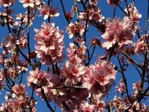 Flores que espantam cores Fotografia de Stock