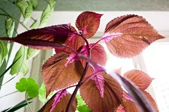 Flores que estão perto da janela sob a luz solar foto de stock