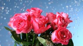Flores que estão sendo molhadas