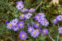 Flores que florecen en el jardín Fotografía de archivo libre de regalías