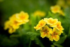 Flores que florecen en jardín de la primavera Fotos de archivo