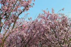 Flores que florescem como uma parte de brocado Imagem de Stock