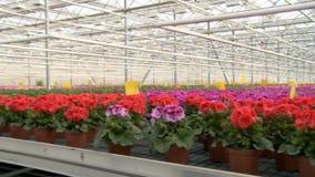 Flores que florescem na opinião industrial da estufa filme