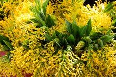 Flores que florescem no fim acima da vista Imagens de Stock