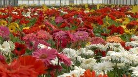 Flores que florescem no vídeo industrial da estufa vídeos de arquivo