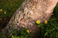 Flores que florescem pelo tronco de árvore Fotografia de Stock Royalty Free
