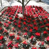 Flores que florescem sob a árvore fotografia de stock