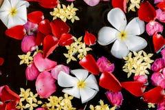 Flores que flotan en el agua Fotografía de archivo