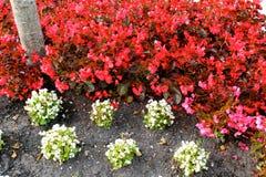 Flores que marchan Imagen de archivo libre de regalías