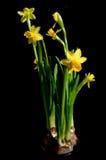 Flores que miran de oscuridad Imagen de archivo libre de regalías