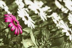 Flores que miran fijamente el sol Fotografía de archivo libre de regalías