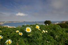 Flores que pasan por alto la bahía Foto de archivo