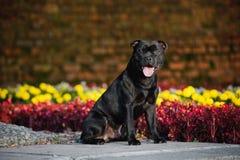 Flores que se sientan del terrier lindo del perro en fondo Fotos de archivo libres de regalías